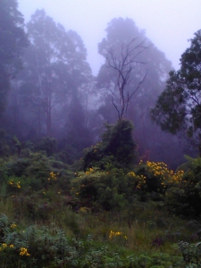mist_1 (960x1280)