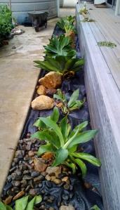 agave_garden_1 (731x1280)