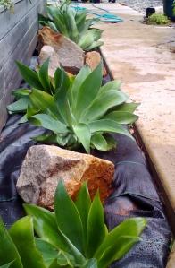 agave_garden_2 (839x1280)
