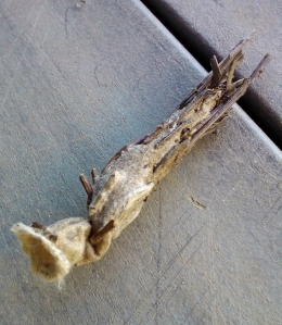 bag_moth_3 (1113x1280)